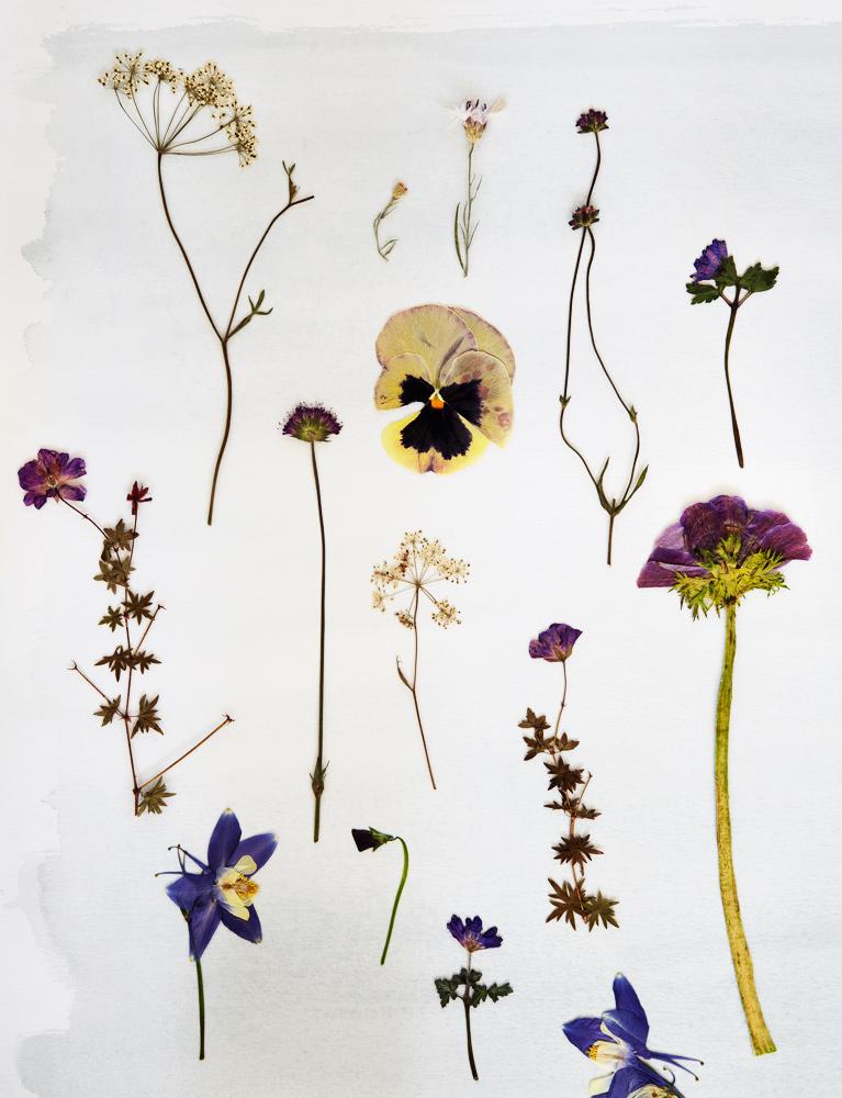 blomster, pressede blomster